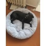 Меко пухено гнездо легло за куче или котка, много удобно за малки и големи животни, изклзчително уютно и топло, различни рамзери и цветове